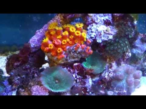 The Beautiful Sun Coral Mp3