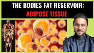 Science of Obesity  - Adipose Tissue as The Fat Reservoir (Pt I)