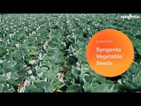 , title : 'Syngenta vFOI Cabbage Highlight Mechanical Harvesting