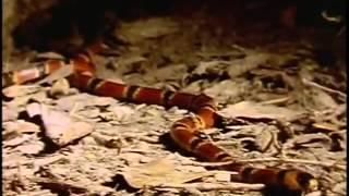 Serpientes (Documental)