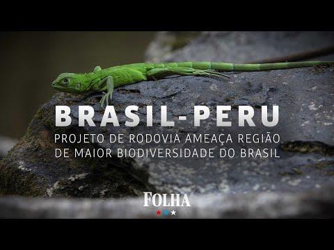 Ressuscitada por Bolsonaro, rodovia ameaça região de maior biodiversidade do Brasil