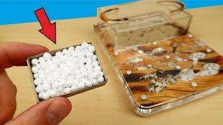 Что если положить муравьям пенопластовые шарики? Реакция муравьев. Формикарий.