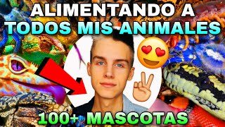 ALIMENTANDO A TODOS MIS ANIMALES (+100 MASCOTAS) *INCREÍBLE* | Tag De Las Mascotas 🐾 | Tomas Pasie