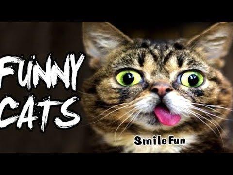 (❤ ‿ ❤) Вите надо выйти нарезка приколов коты █ ▆ ▅ ▃ ▂ ▂ ▃ ▅ ▆ █