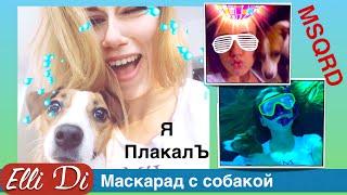 Приложение MSQRD. Приколы с собаками Elli Di. Маскарад   masquerade.