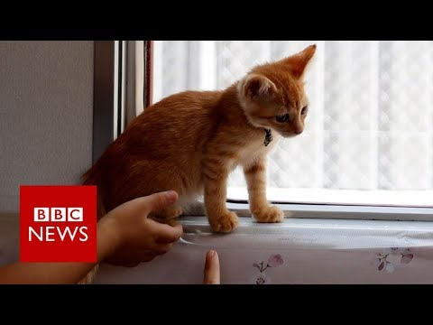 Cats invited on to local train - BBC News