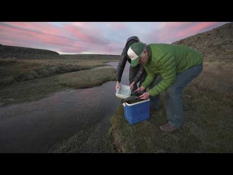 Brook trout restoration in south Patagonia