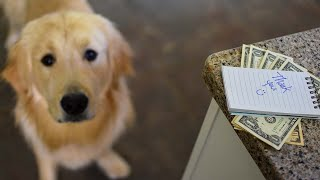 How Much to Tip a Dog Sitter?