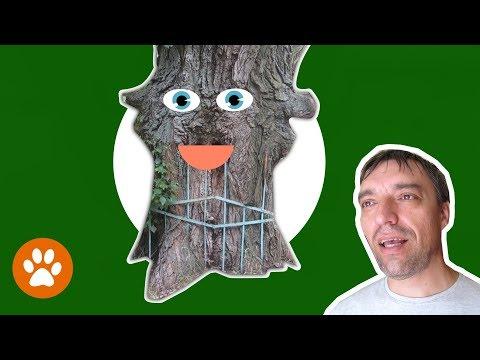 ✅ ПОТРЯСАЮЩЕ! Вросшие в дерево ... ЭТО ДЕРЕВО  ЖИВОЕ!?
