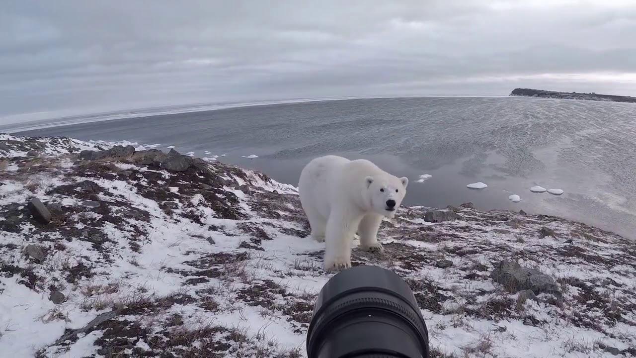 """""""Рано или поздно меня съест белый медведь"""""""