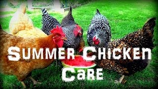 Caring For Chickens In The Extreme Summer Heat