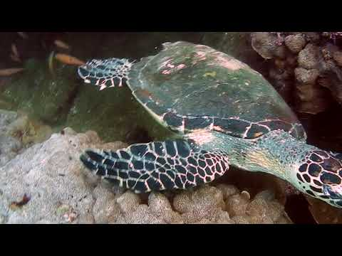 Scuba Diving in Huatulco, Mexico