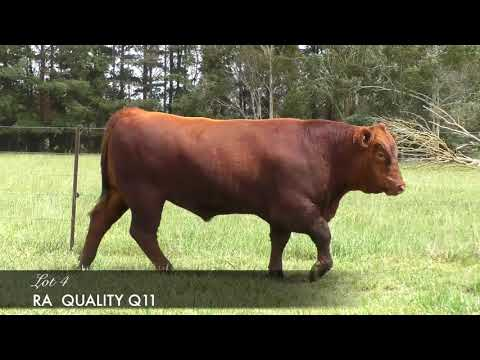 RA QUALITY (AMF) (MAF) (NHF) (OSF) RANQ11