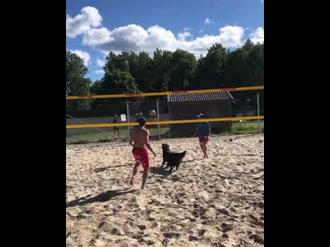 Η... ταλαντούχα σκυλίτσα Κιάρα είναι άσος στο beach volley!