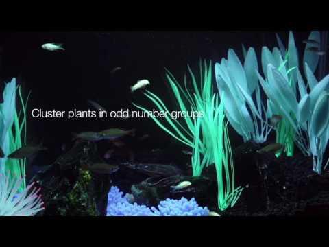 Tetra® – Aquarium Decorating Tips