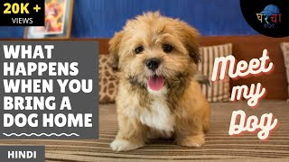 MEET MY DOG- LEIA | Lhasa Apso | Comedy Video | Indian Parents | Gharcha Boy Gets A New Pet |S1 : E6