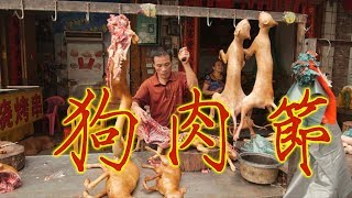 ዦ 47ዣ Наньнин. Фестиваль собачьего и кошачьего мяса