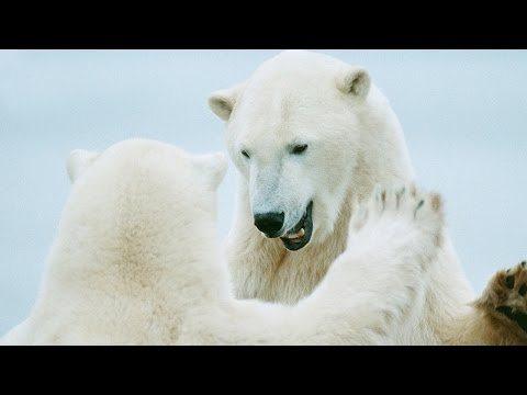 World Wildlife Fund (WWF) Commercial (2014 - 2015) (Television Commercial)