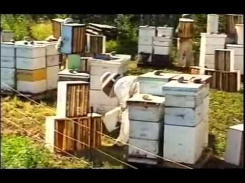 Пчеловодство в Канаде