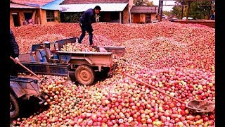 How Apple Juice Made in Factory? - Apple juice production from Apple