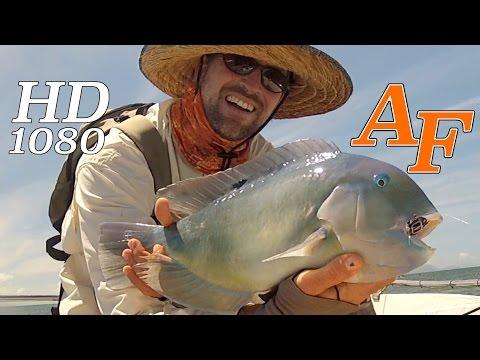 Black Spot Tusk Fish (1st)