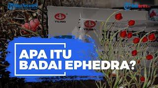 Apa Itu Ephedra? Bahan Obat Covid-19 Lianhua Qingwen asal China yang Disetop BPOM