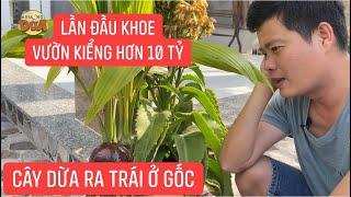 Lần đầu Khương Dừa khoe vườn kiểng hơn 10 tỷ, độc đáo nhất là 2 cây dừa ra trái ở gốc???