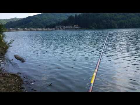 Relazioni su pesca in kurovo