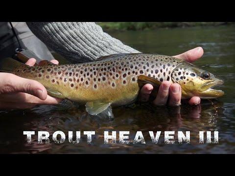 Trout heaven 3