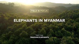 Elephants on YouTube: Field In Focus