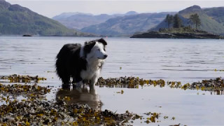 1 minute 15 seconds of pure joy and exceptional scenery HighlandHighlights by Gavin Shand