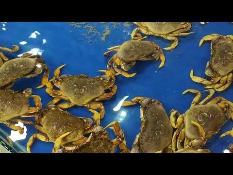 #béhảimy #hảisản Hải sản tươi ngon, hải sản Đà Nẵng - Fresh seafood, Da Nang seafood