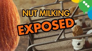 Nut Milking EXPOSED