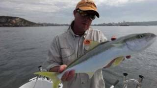 Fishing Sydney Harbour with Tsunami Stick Baits [VIDEO]