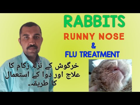 , title : 'RABBIT Nazla Zukam ka elag || How to Treat  Flu & Runny Nose in Rabbits || MALIK RABBIT FARM