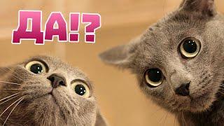 Удивительные факты о кошках.