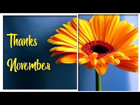 My November - Short Video Blog