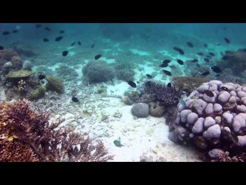 Diving Komodo Dec 2012 Part 2, Komodo Nationalpark,Indonesien