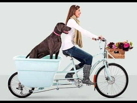 Andare in bici col cane: come fare?