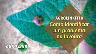 Como encontrar o problema de sua lavoura no AgrolinkFito?