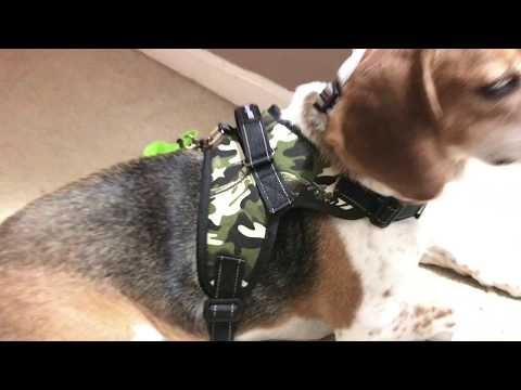 MerryBIY Dog Harness Pet Vest, No-Pull Adjustable Collar Dog Harness For Small Medium Large Dogs