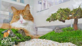 Making a Bonsai Tree Aquarium