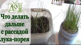 ЛУК ПОРЕЙ. Выращивание в РУЛОНЕ (подсыпаем землю) и пересадка в лоток.