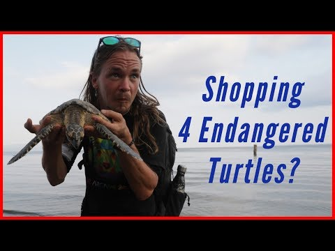 Shopping 4 Endangered Turtles!? #Creatorsforchange