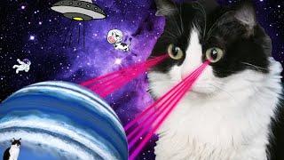 Смешные коты   Подборка за неделю #6   Котопятница