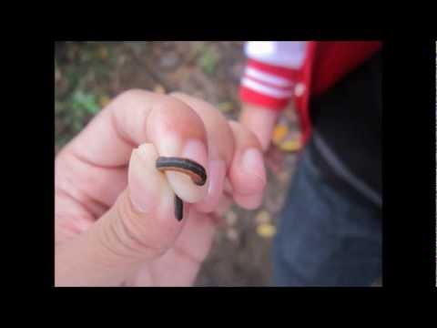Na mga pumasa sa pagsusulit sa mga parasito sa mga bata