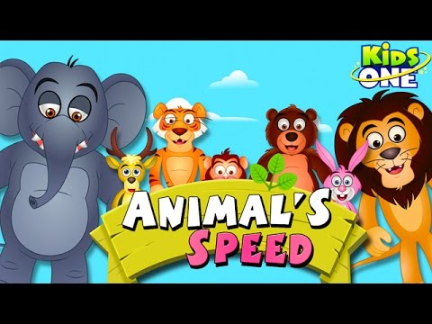 Animal's Speed Fun Cartoon Animation For Children