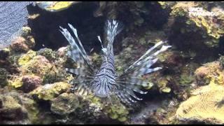 El libro rojo, Especies amenazadas - Arrecifes, vecinos, visitantes y un intruso