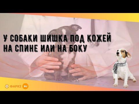 У собаки шишка под кожей на спине или на боку