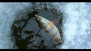 Рыбалка на реке чулым зима